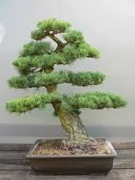 télikerttervezés növények bonsai