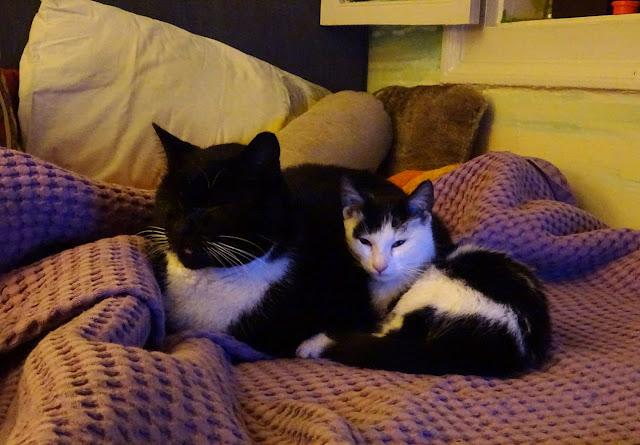 Μια αφιέρωση στις φίλες γάτες που γυρίζουν στο λαγούμι του Κούνελου...