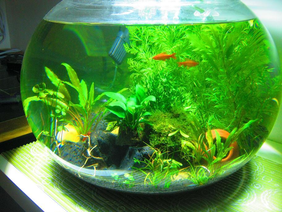A night by the aquarium unboxing jumbo fish bowl for Fish bowl aquarium
