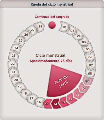 439da8aec Vas a tomar como referencia el primer día de tu tu ultima regla (día que  inicio) tomando en cuenta que este calculo es funcional cuando se tienen  periodos ...
