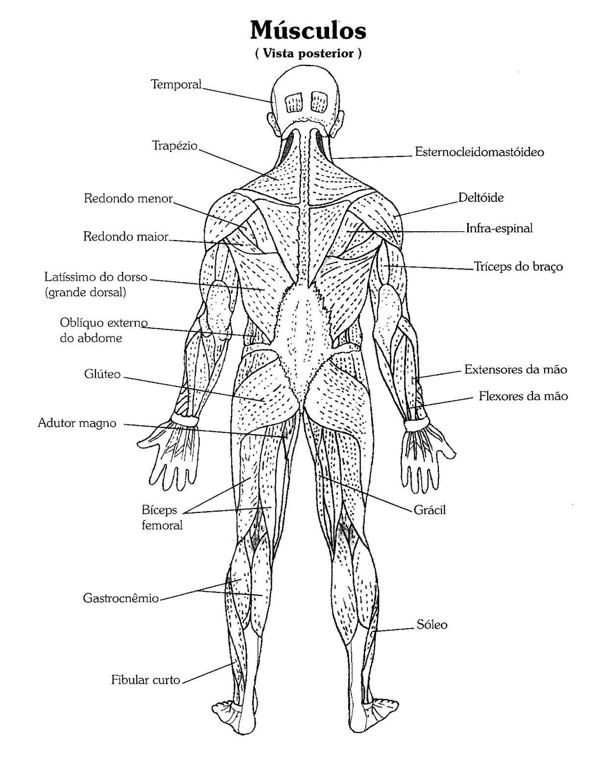 Desenho Do Corpo Humano Por Dentro