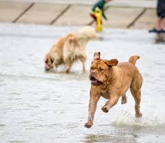 preparations to ensure you and your dog enjoy a fun summer holiday