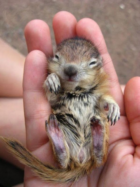 Mê mẩn với 22 loài động vật tí hon nằm gọn trong lòng bàn tay