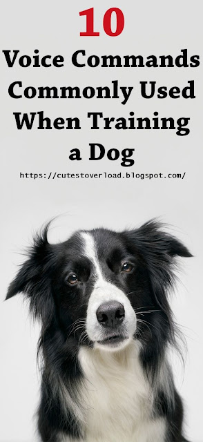 10 Voice Commands Commonly Used When Training a Dog