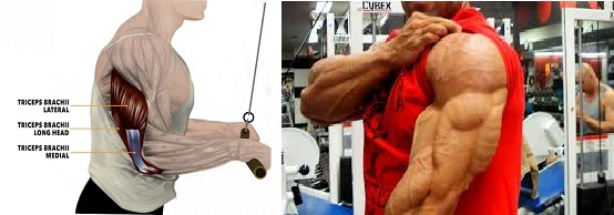 3 Triceps Exercises For Mass