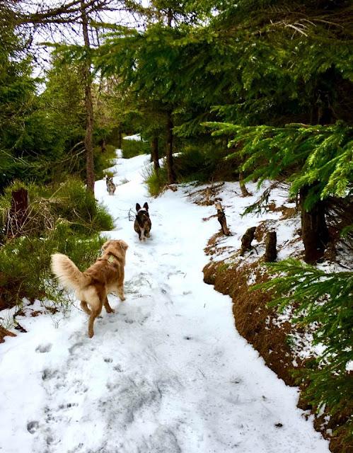 góry z psem, wędrowanie z psem, podróże z psem