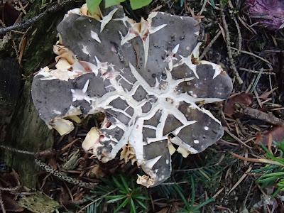 grzyby 2017, grzyby w sierpniu, grzyby w czasie suszy