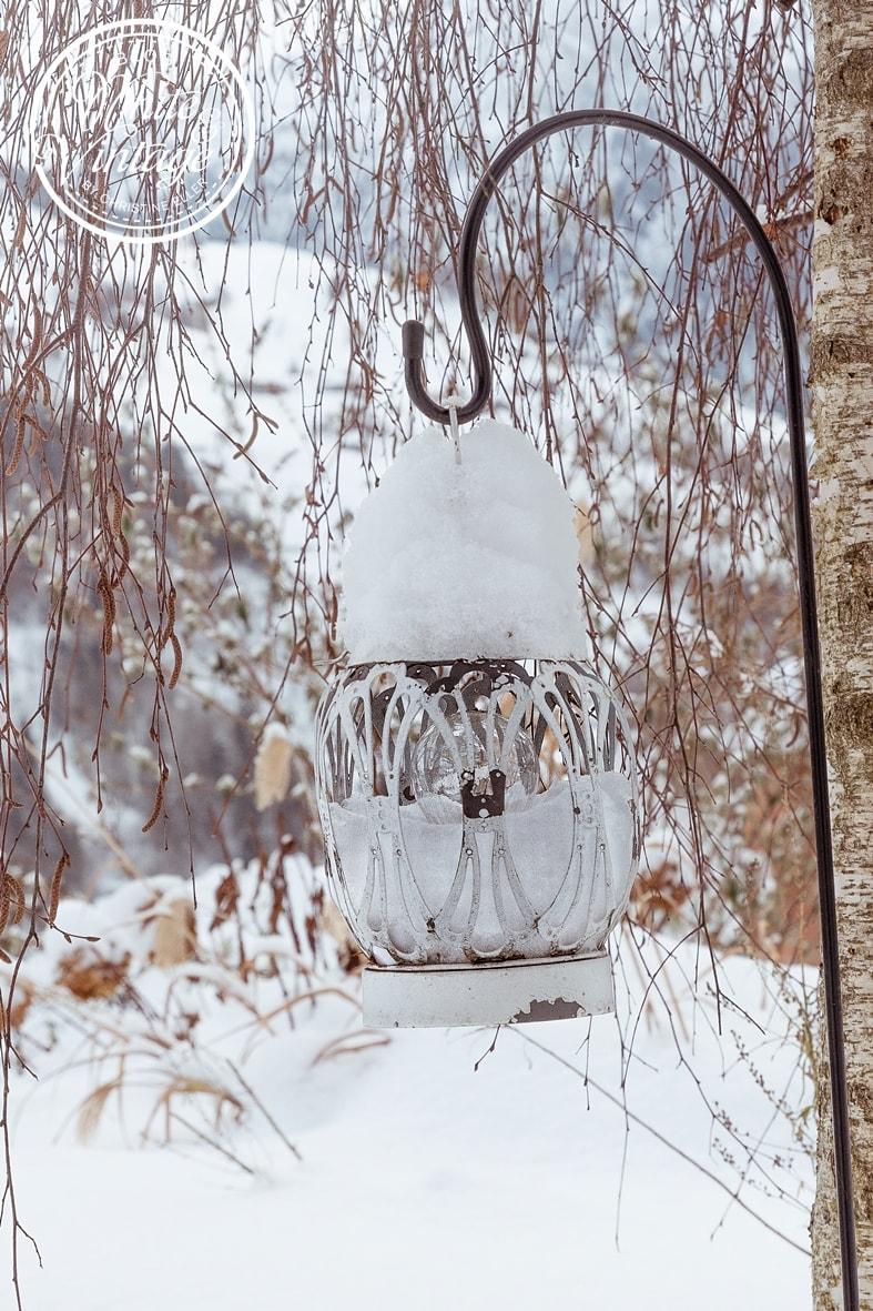 Winterbilder: Garten im Schnee.