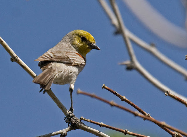 Verdin Vallecito County Park