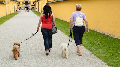 Two Heavy Women Walking Their Dogs