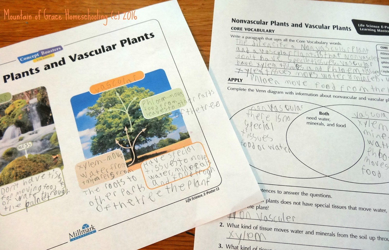 enchanted learning has a wonderful selection of plant lessons and worksheets we used a few of them too the kids did a fun experiment with celery and food