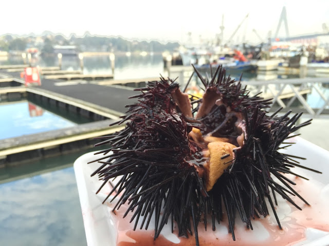 Sydney Fish Market - Sea Urchin