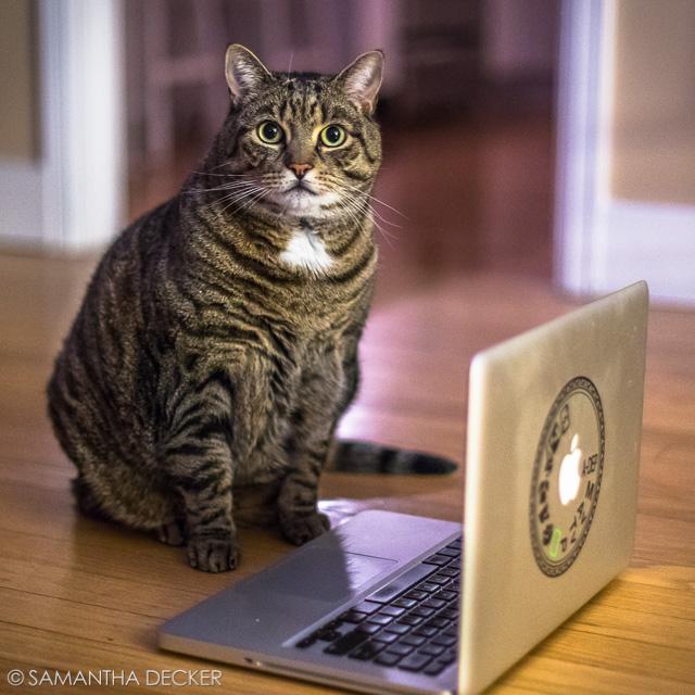 Casey's No Copycat!