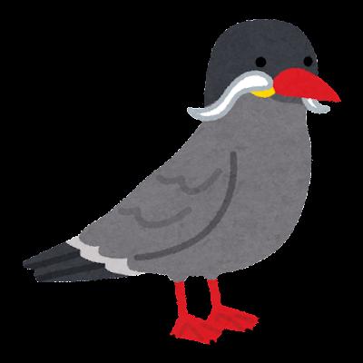 インカアジサシのイラスト(鳥)