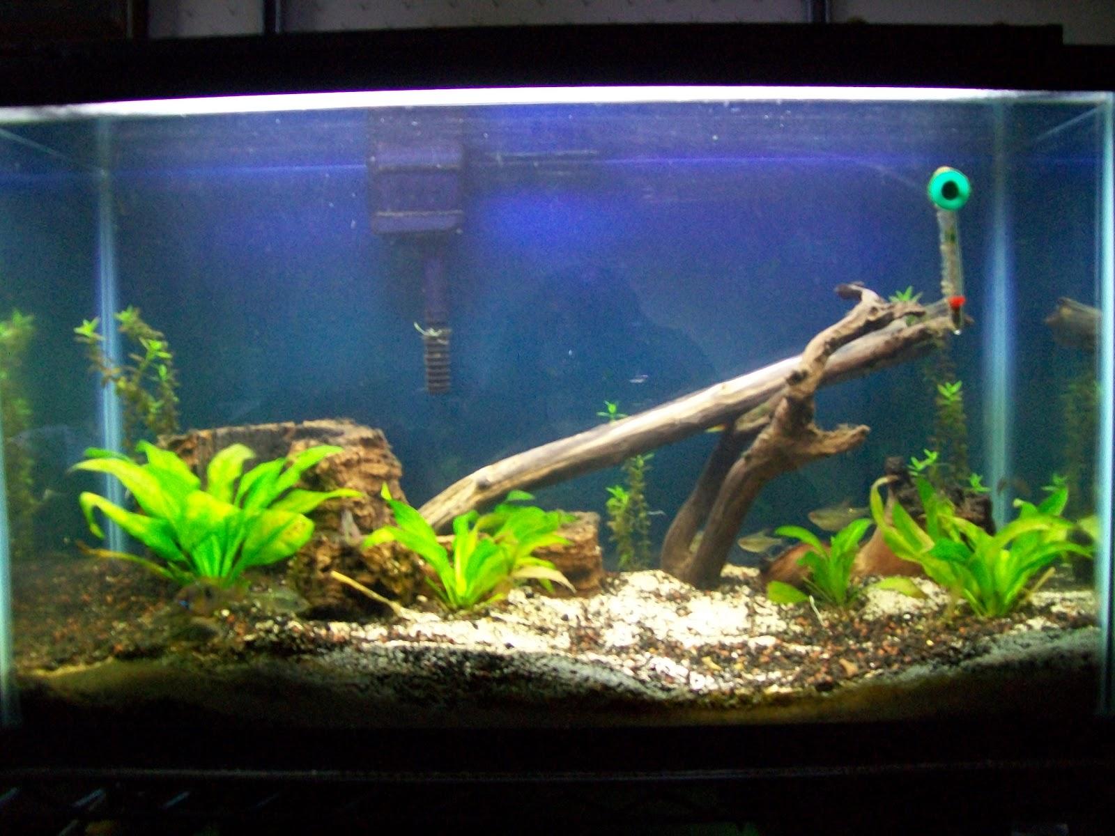 30 gallon native fish tank tanks a 30 gallon tank that for Fish tank gallon calculator