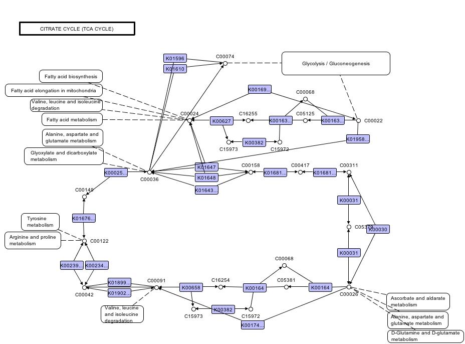 Armchair Biology: KEGGWatch, part I