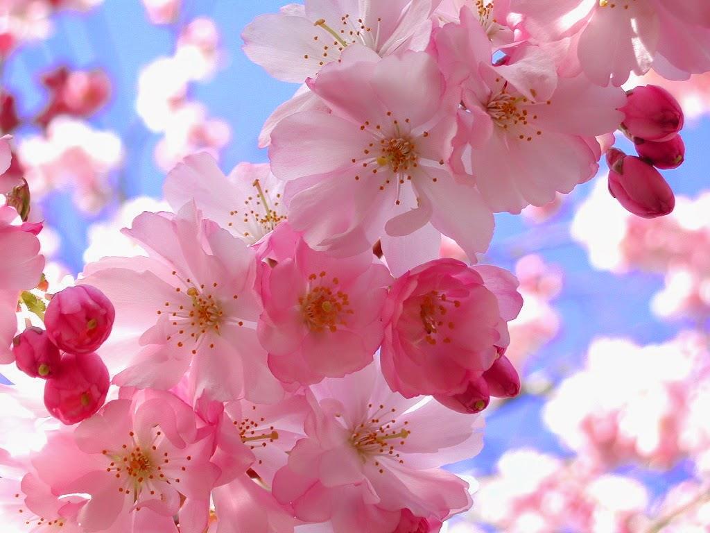 خلفيات مختلفه  و صور للطبيعه وازهار واشجار عاليه الجوده 2