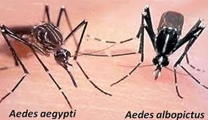 Image result for penyakit chikungunya