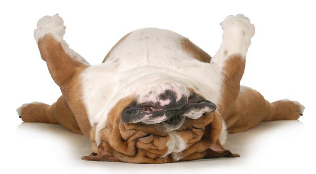 Dog sleeping on his back_Adobe Stock