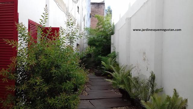 Patio ajardinado de manera contemporánea con bambú al fondo