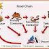 Rantai Makanan & Jaring Makanan - Definisi & Contohnya