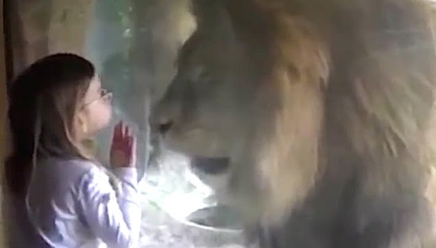 Sweet little a girl blows a kiss to a lion