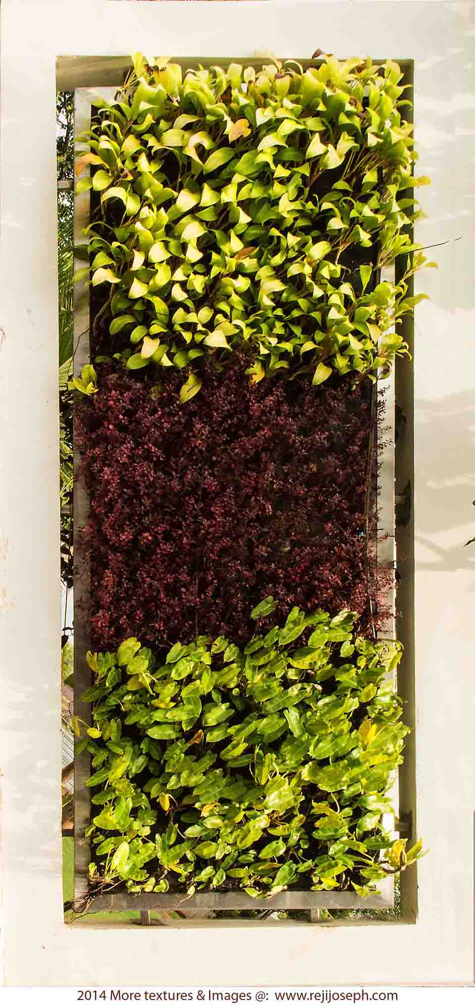 Garden Plant texture 00004