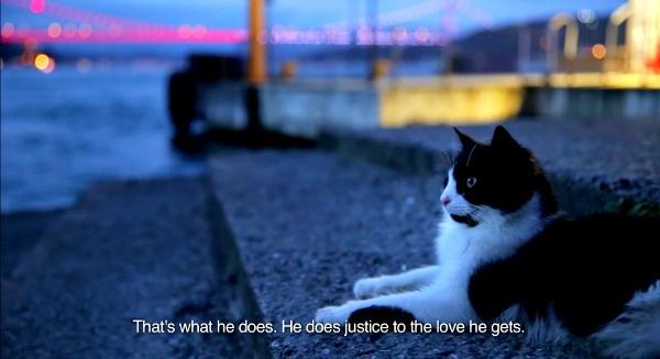 kedi film