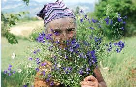 Risultati immagini per Agricoltura bioregionale contadina in Emilia
