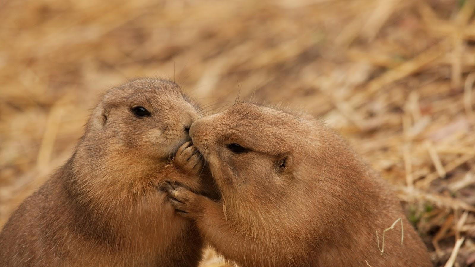 Жизнь надписями, влюбленные животные прикольные картинки