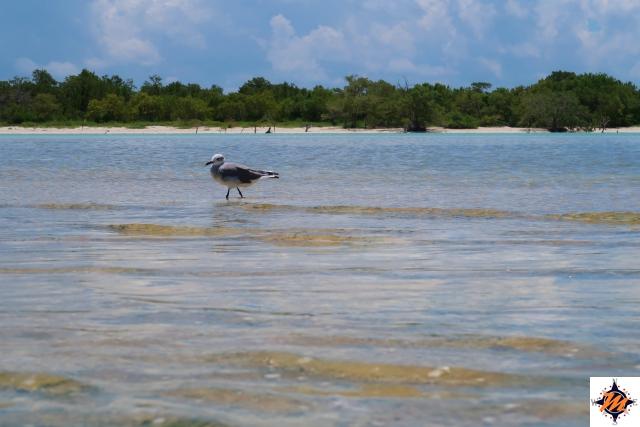 Holbox, Punta Mosquito