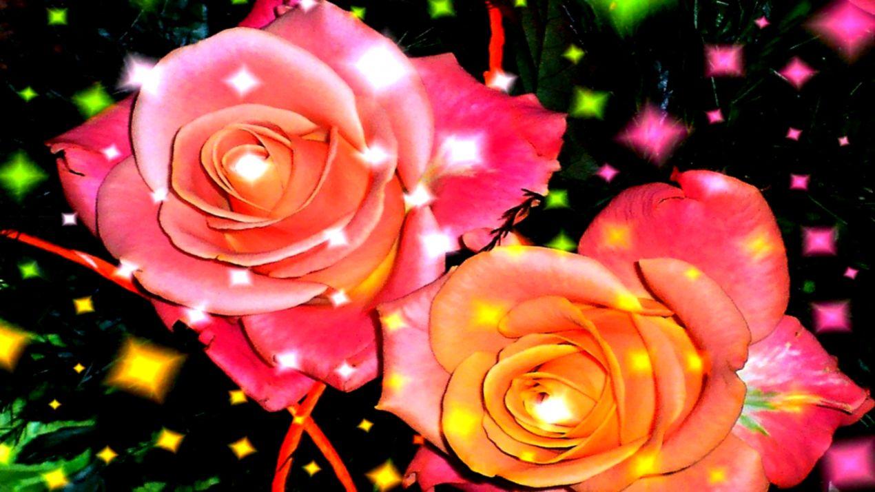 Wallpaper Hd Nature Flower Rose Hd Wallpapers Titan