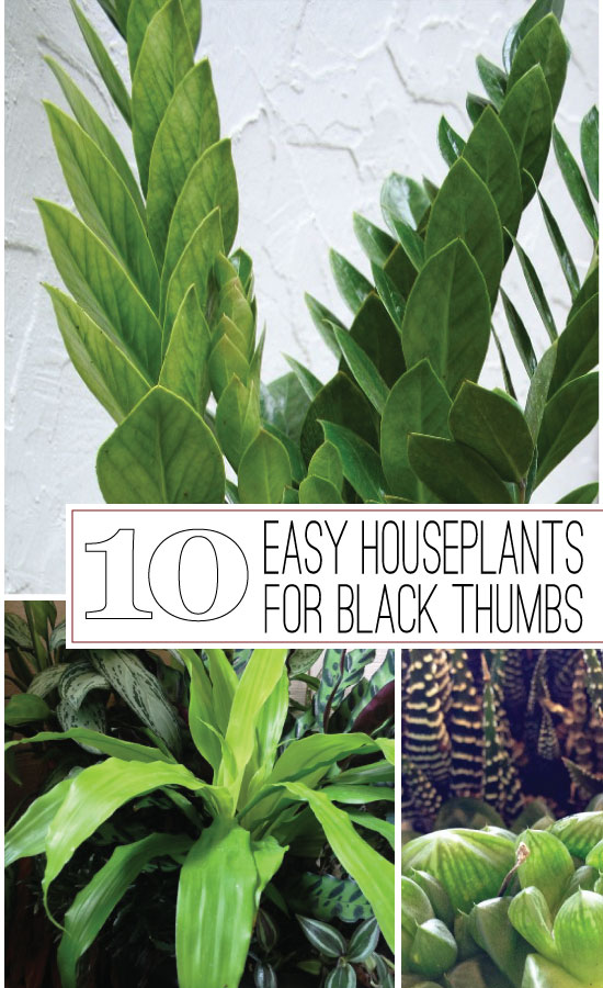 The Rainforest Garden 10 Of The Easiest Houseplants For