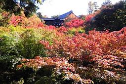 東福寺紅葉クライマックス