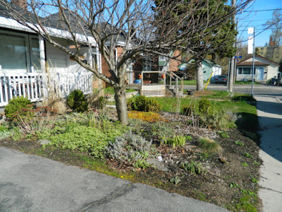 Birch Cliff Toronto spring garden clean up before by Paul Jung Gardening Services