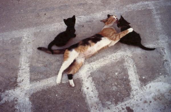 mother cat grooming kittens