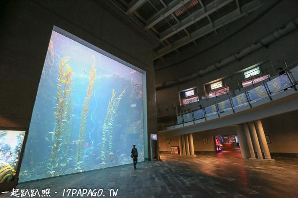 巨大海藻林,海藻可長到60公尺以上