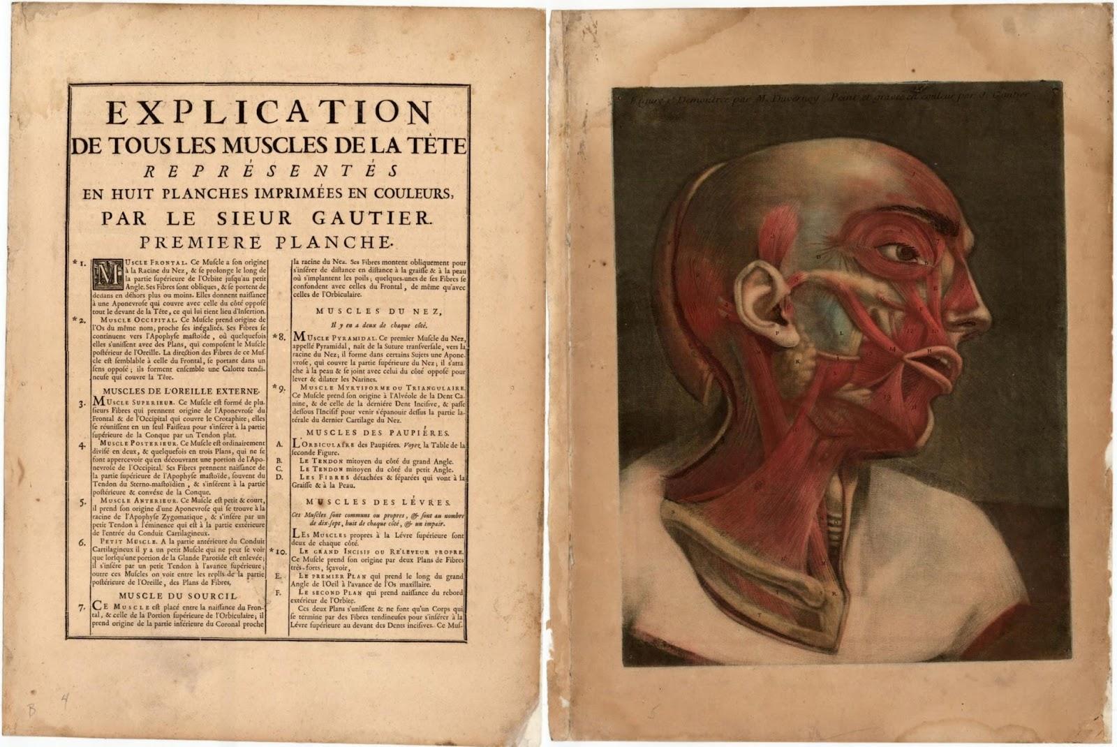 Data Deluge: Essai d\'Anatomie (1745)