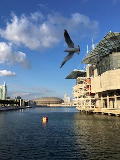 Oceanário com boneco Vasco na água e ave voando