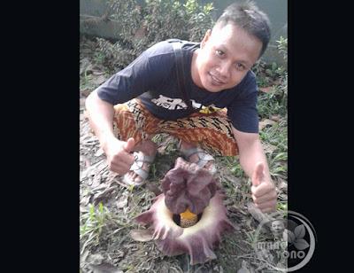 Mang Mansur warga Subang dan Bunga bangkai