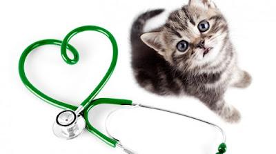 لعشاق تربية القطط أمراض تسببها القطط يمكن أن تنتقل بين القطط والبشر