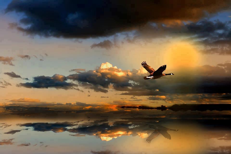 Dê A Quem Você Ama Asas Para Voar Raízes Para Voltar E: Sidartha