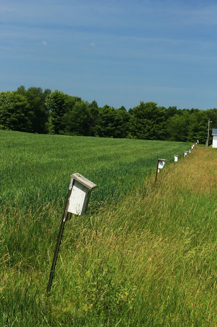 Birdhouses on poles form field's boundary