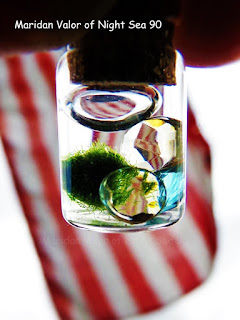 Lol, Mad Photo Editing Skills; mini marimo in a mini bottle. Check out my blog for more.