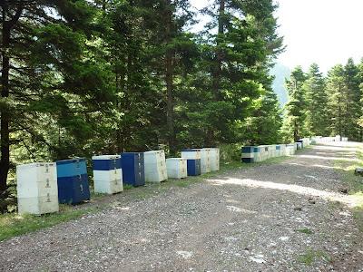 Τα πλεονεκτήματα των μεγάλων μελισσιών