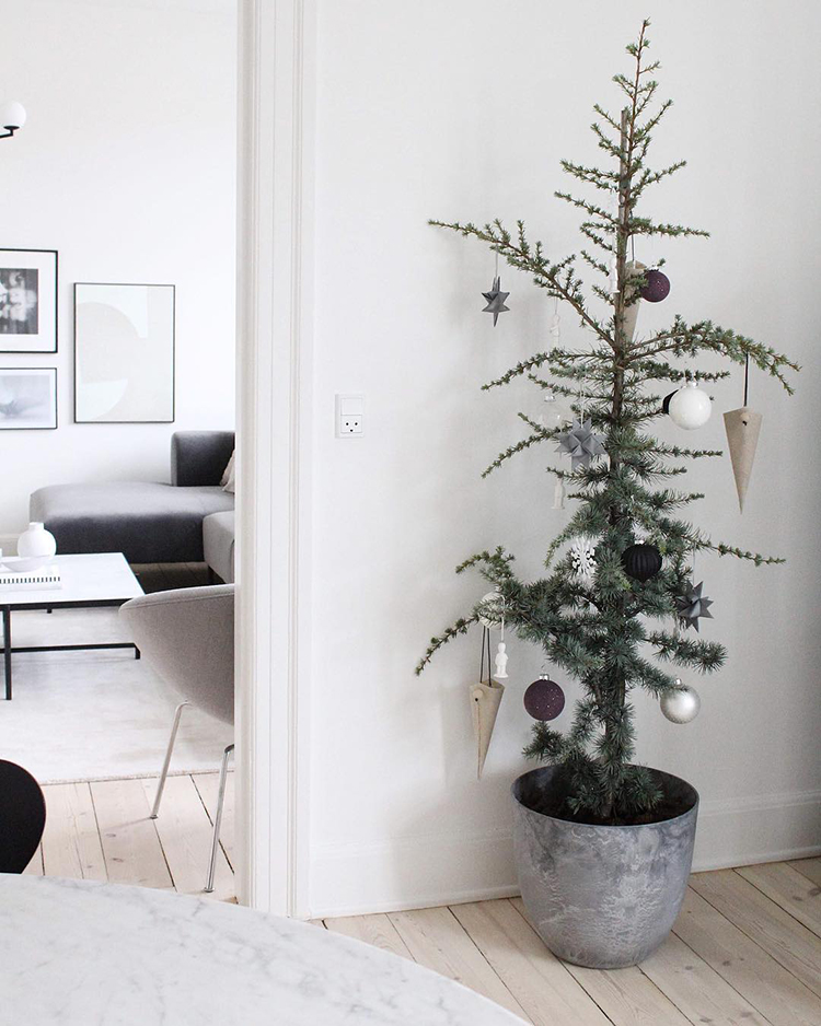 Sustainable Christmas decor, natural potted Christmas tree, Christmas tree plant, small space Christmas decor, natural Christmas decor, Scandinavian Christmas decor, minimalist Chritsmas tree. Photos and idea by Carla Sofie Molge