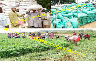 Fertilizer Distribution Business | Business Plans | How To Start in Nigeria