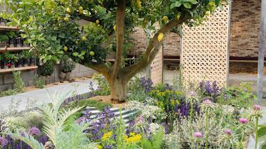 Un jardín en Chelsea inspirado en la experiencia de los refugiados: The Lemon Tree Trust Garden
