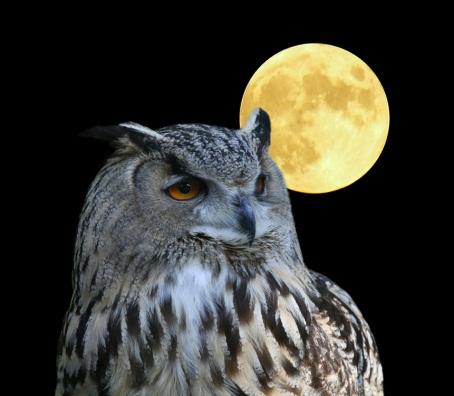 astrologiaa kuun merkeissä