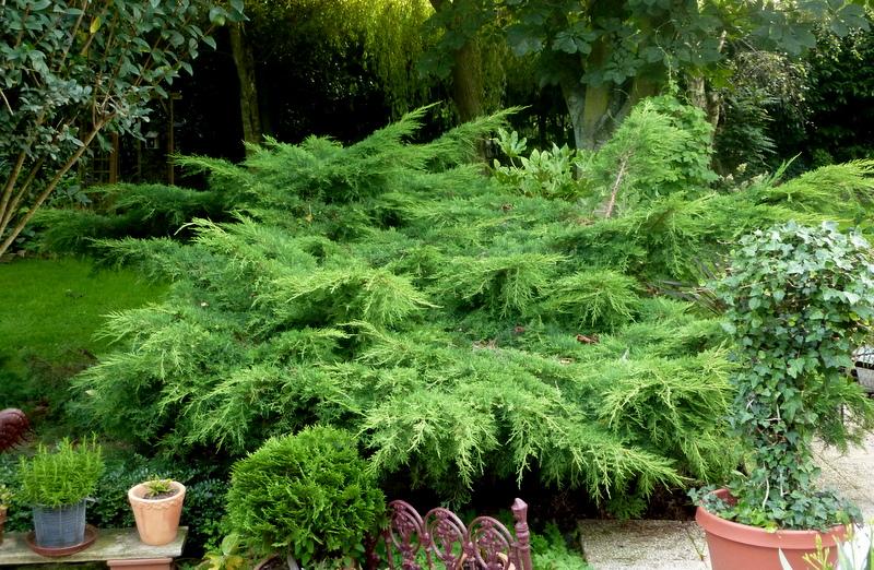 Le jardin d 39 oscar - Petit jardin que mettre mulhouse ...
